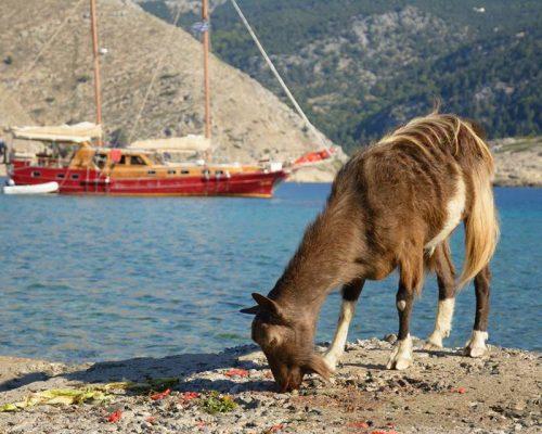 zeilvakantie zeilen blue cruise Turkije Griekenland (234)