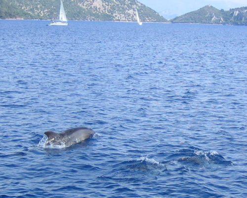 zeilvakantie zeilen blue cruise Turkije Griekenland (61)